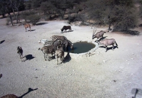Zebras and Gemsbock at Hondevang Water Hole