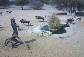Blue Wildebeest at Gat Dam Water Hole